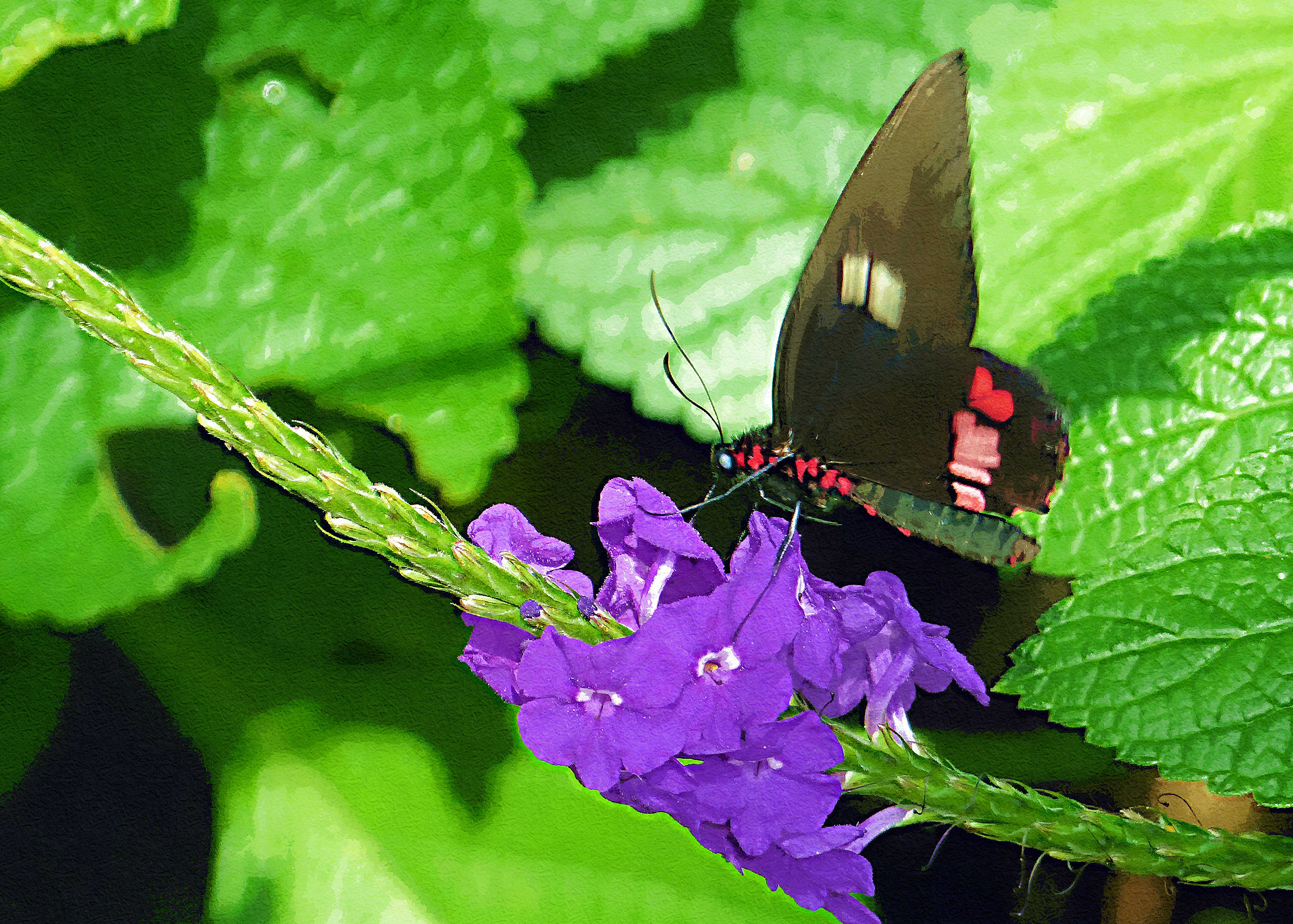 mexican-longwing2