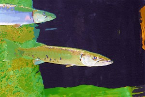 2fish-11