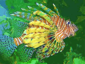 500-lionfish