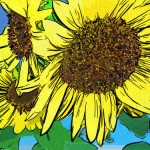 500-sunflowercluster-collage