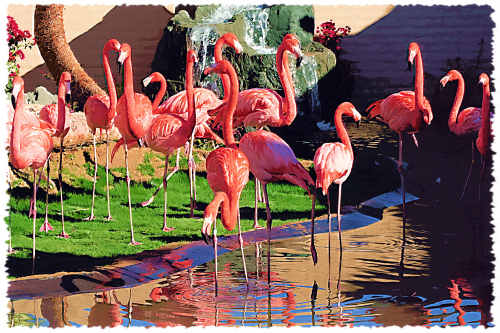 Flamingos at Wildlife World Zoo & Aquarium