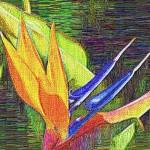 birdofparadise-embroidery