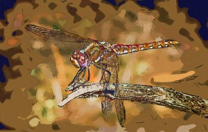 dragonfly-collage