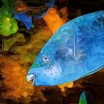 fish-5dbg050108