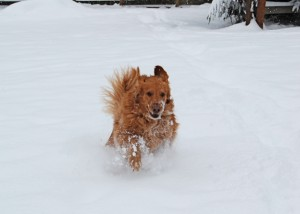 Gracie gallops through the snow in Monroe, Washington December 18, 2008