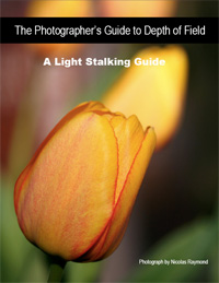 lightstalkingebook