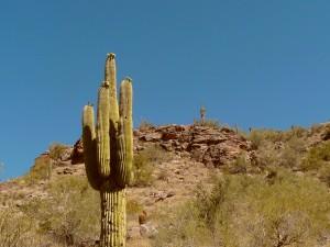 saguaro41511-1