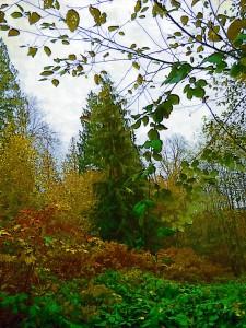 talltree-impasto