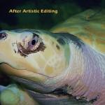 turtle5b