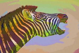 zebrascream-collage