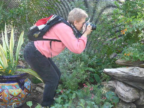 Judy Vorfeld photographing Monarch butterflies at Desert Botanical Garden