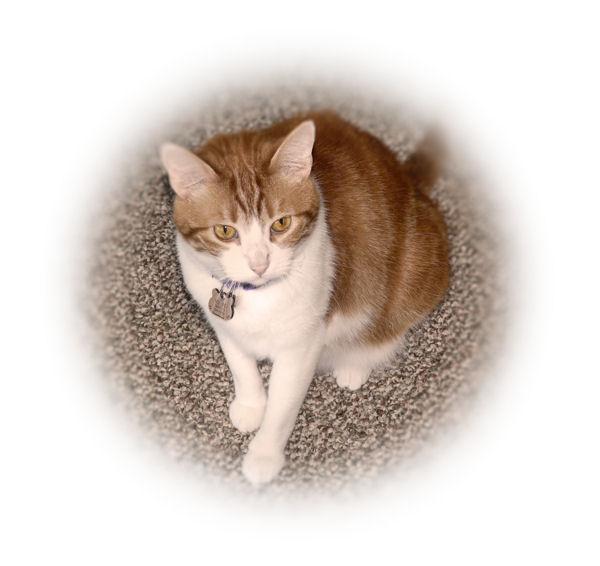 MoeMoe, one of Judys Hawaiian grand-cats