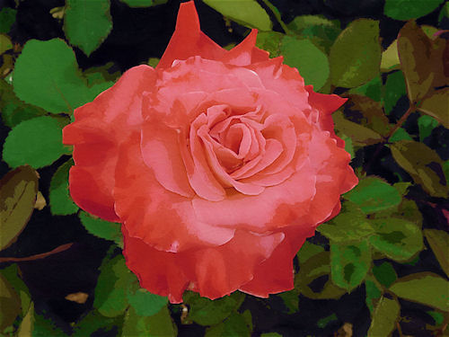 Red Rose at Sahuaro Ranch Park Photographed and redigitized by Judy Vorfeld</font>